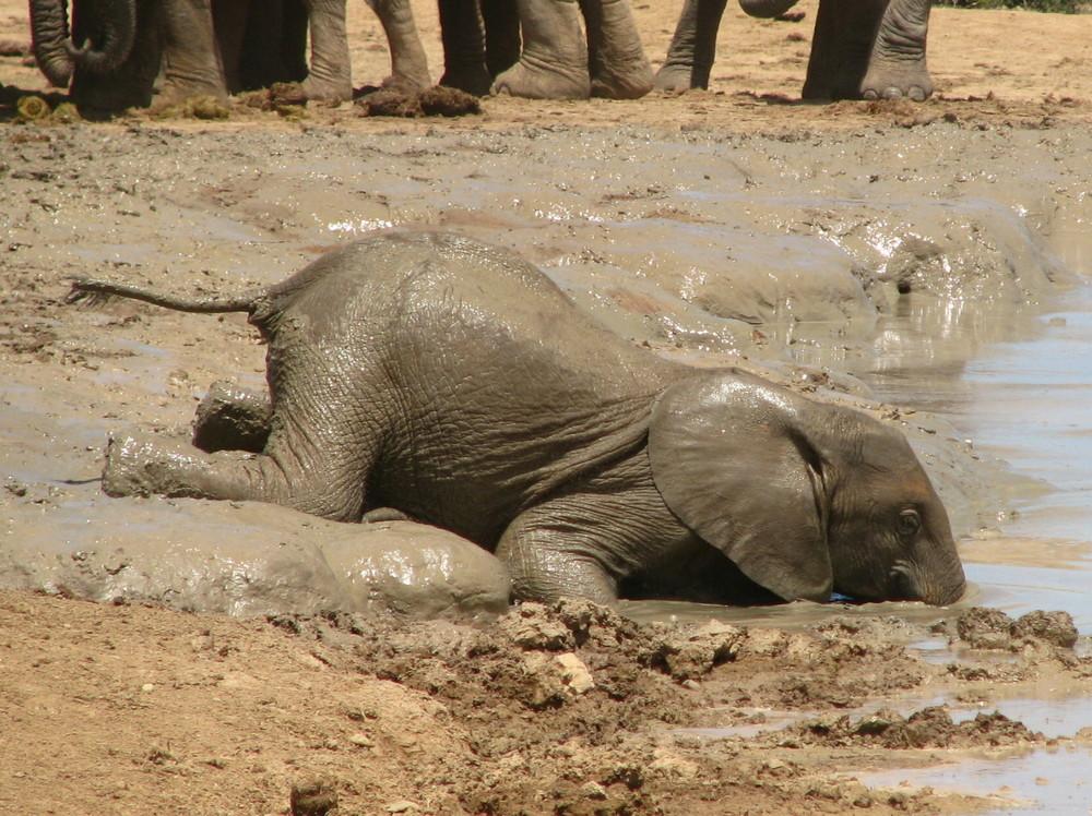 ADDO-Elephant