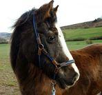 Ade, mein Pony Joschi