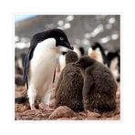[ Adelié Penguins ]