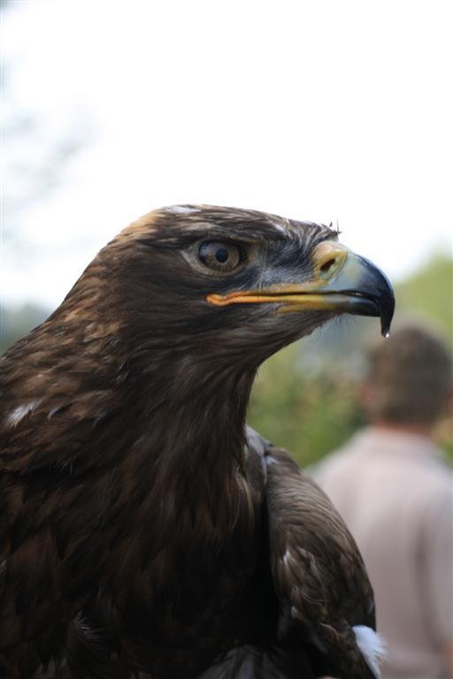 Adler - 2