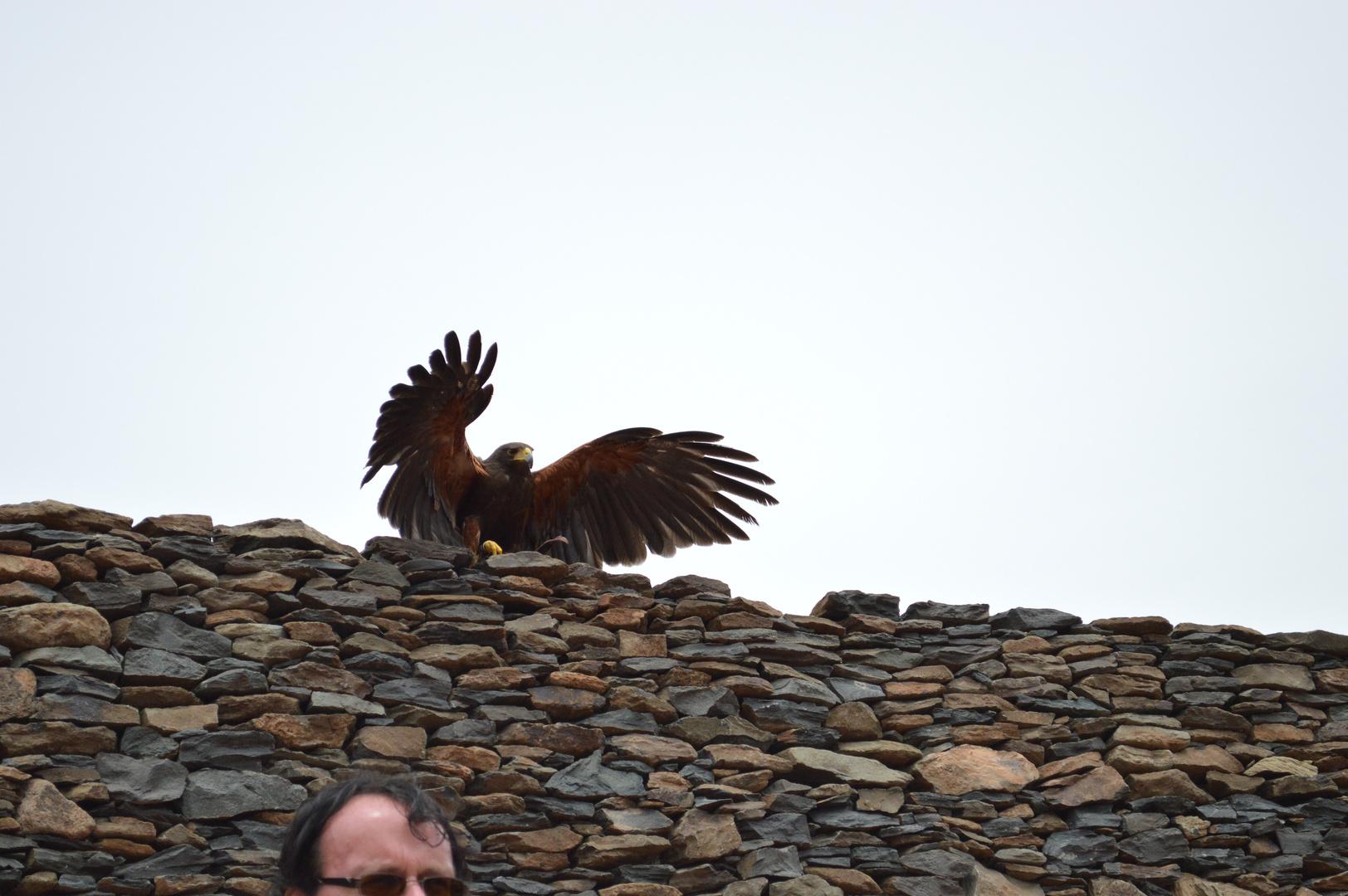 Adler beginnt Flug
