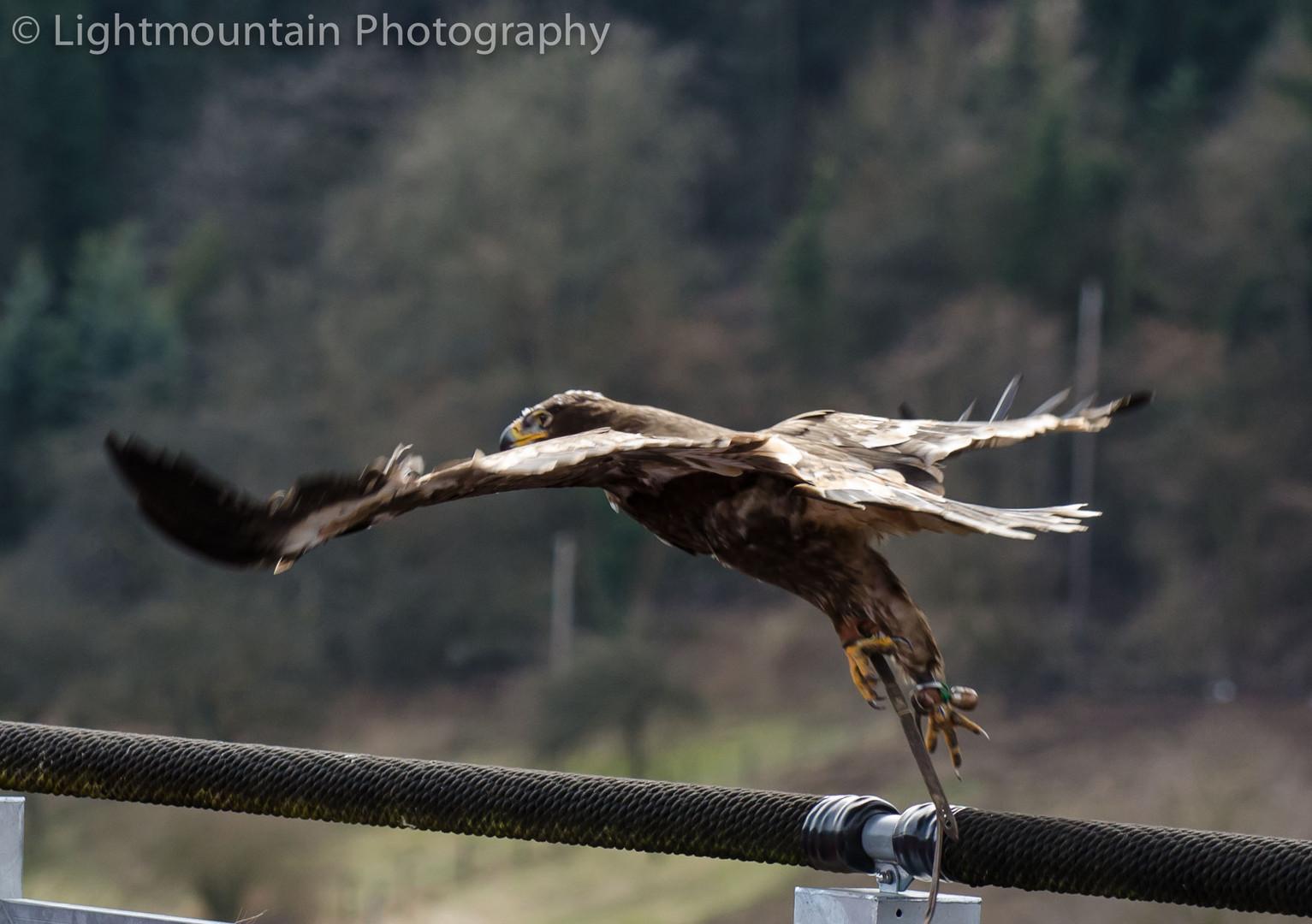 Adler Flug