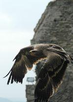 Adler Flugphase1