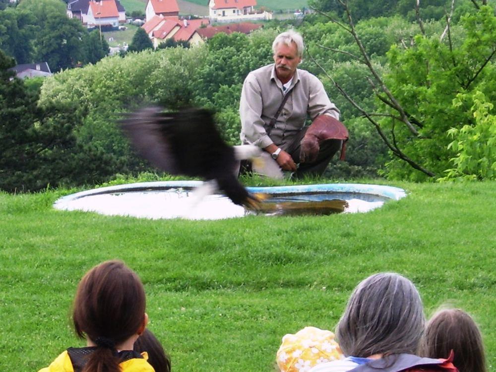 Adler greift Beute