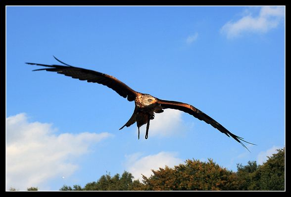 Adler im Anflug_03