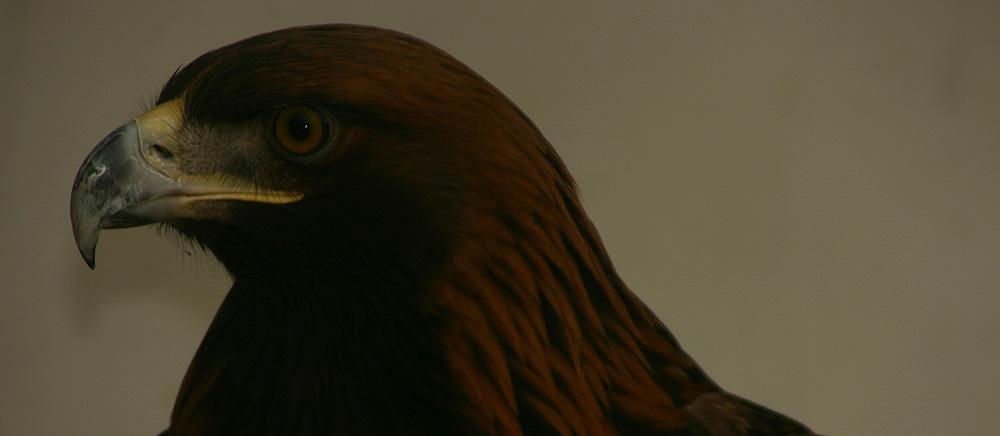 Adler in Peking