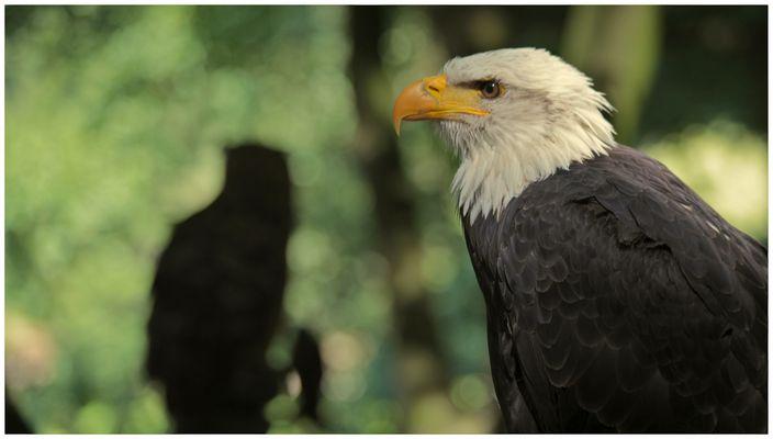 Adler und Uhu