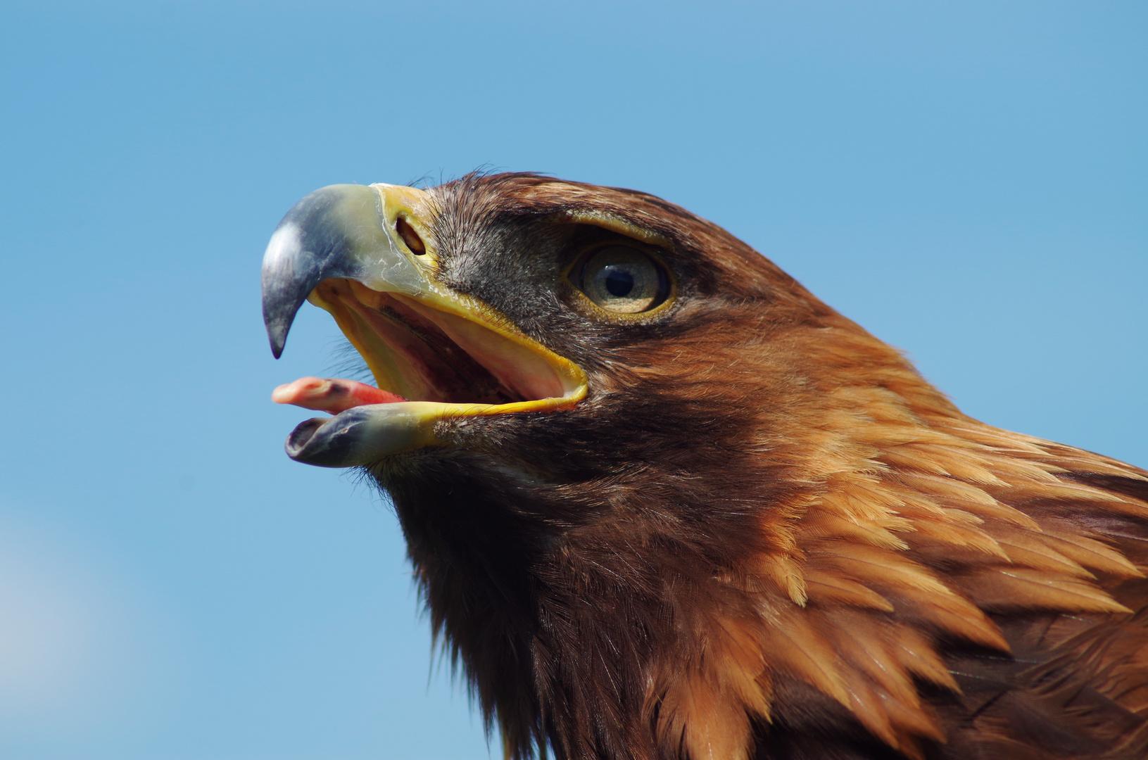 Adler zum 1.
