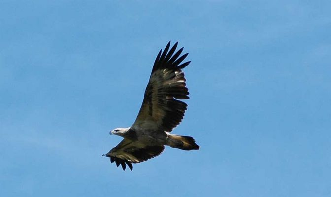 Adler zum Zweiten