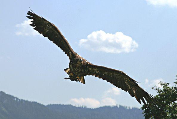 Adler02