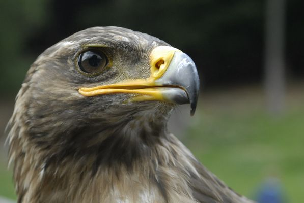 Adlerauge stets wachsam