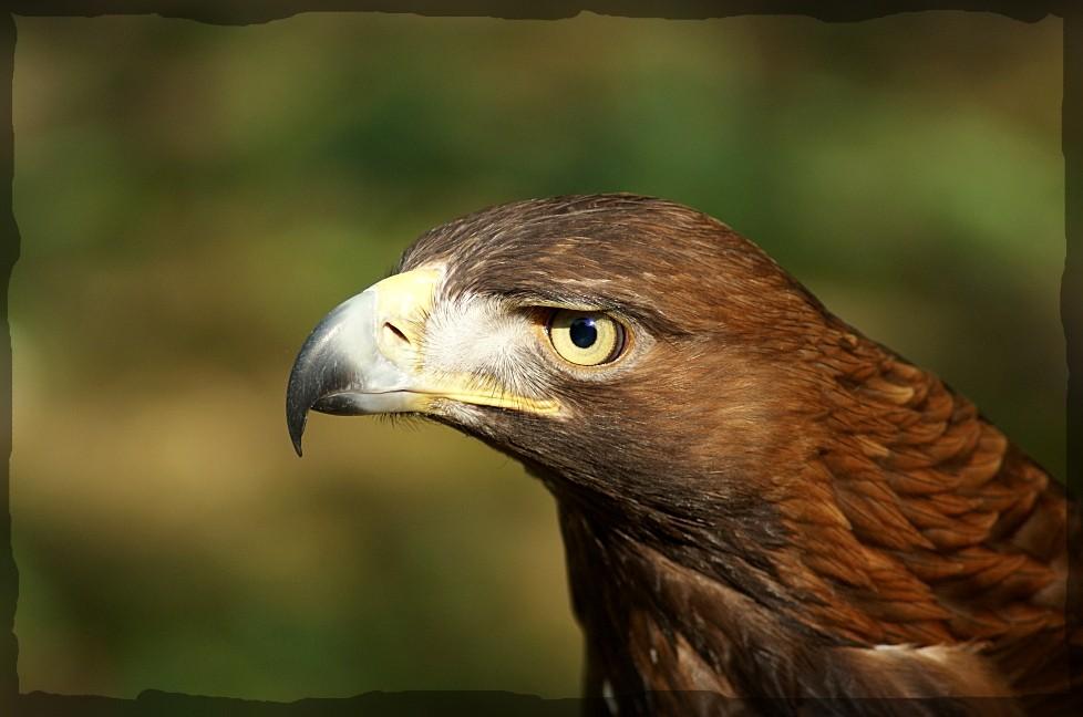 Adlerkopf (2ter Versuch)