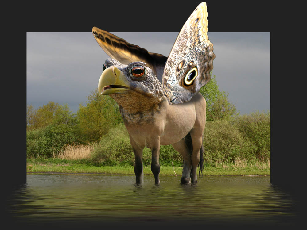 ... Adlerkrötenflatterpferd ...