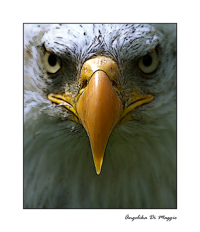 Adlerporträt