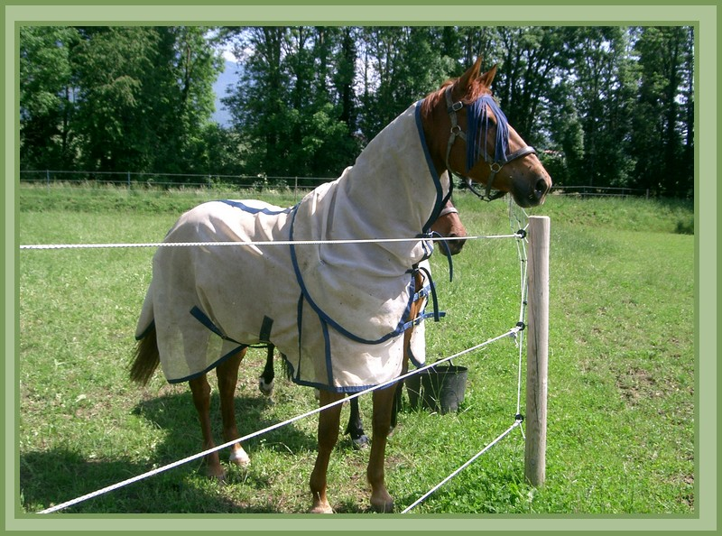 Adorable chevaux