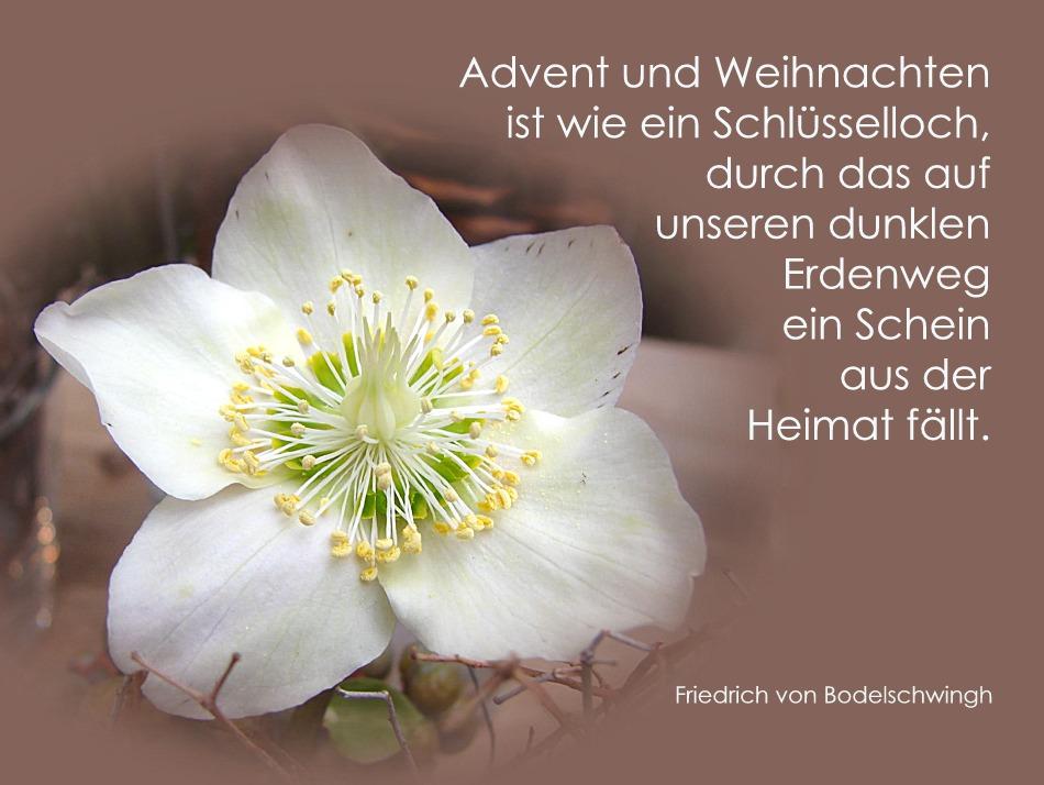 Advent - ...immer ein wenig Heimat...