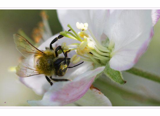 Aïe !!!! j'ai du pollen dans l'oeil !