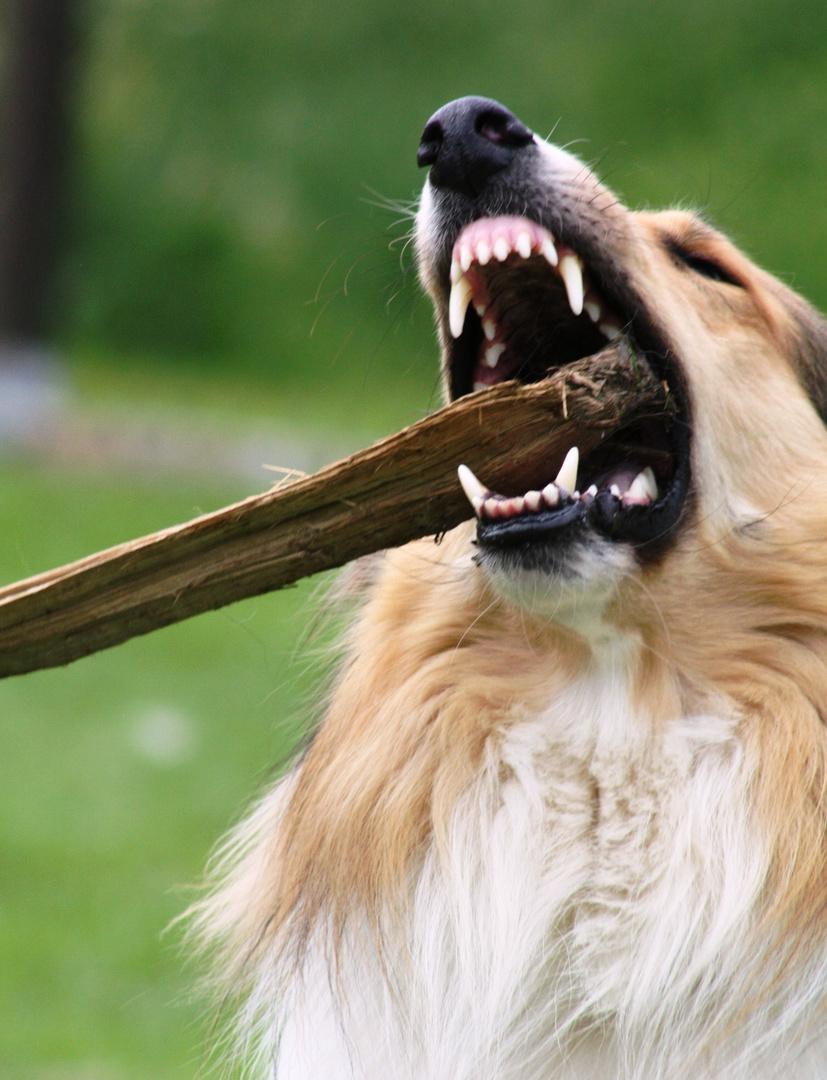 ähhm, ja, die Zähne sind geputzt
