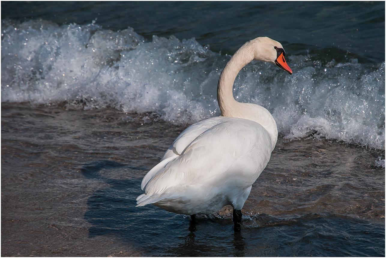 Ängstlich am Gardasee......
