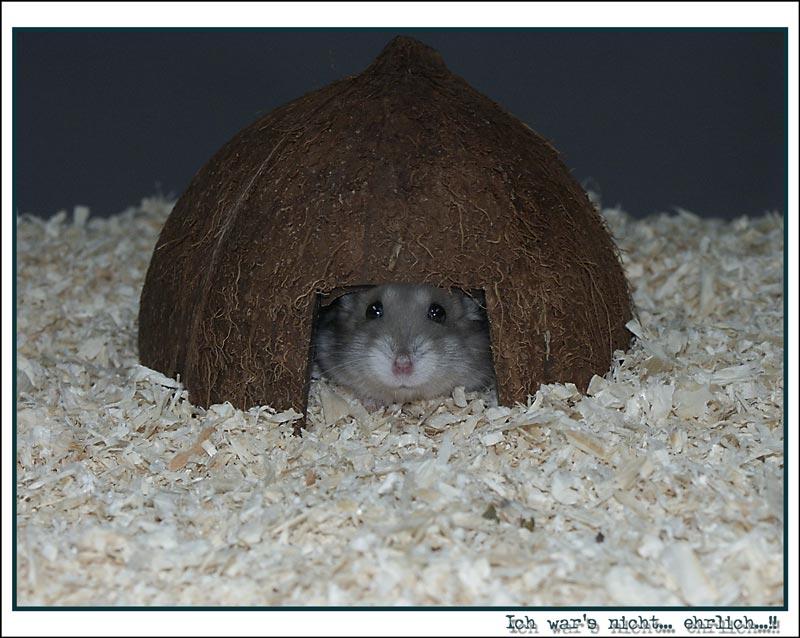 Ängstlicher Hamster
