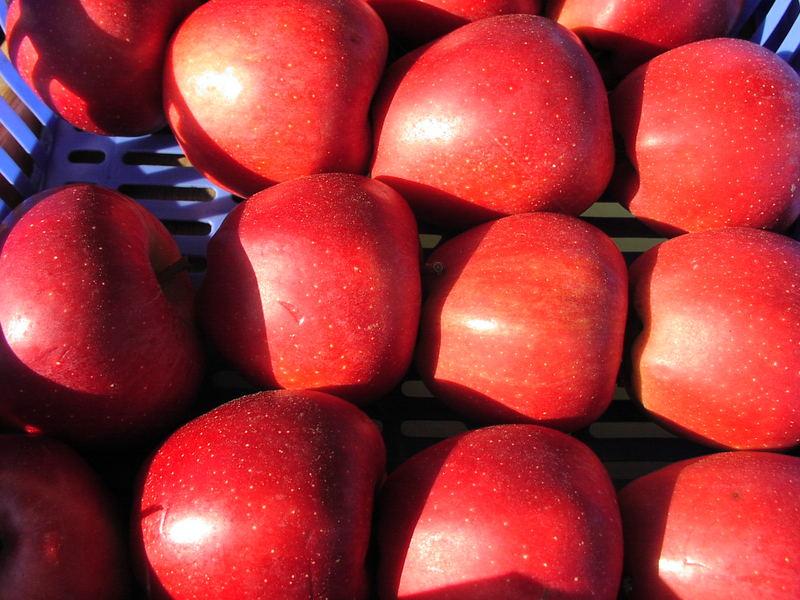 """Äpfel """"...im Alten Land"""""""