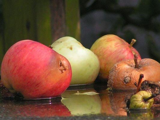 Äpfel im Wasser