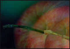 Äpfel in Dreifach