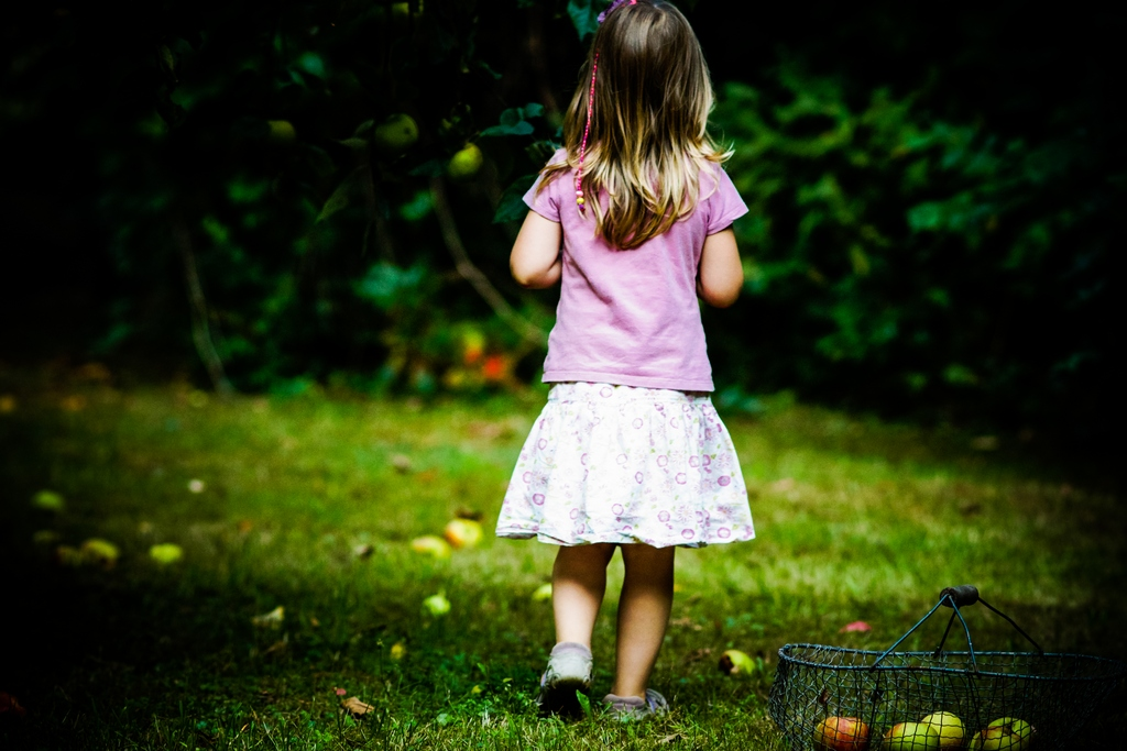 Äpfel sammeln