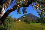 Äpfel vor dem Schattenberg
