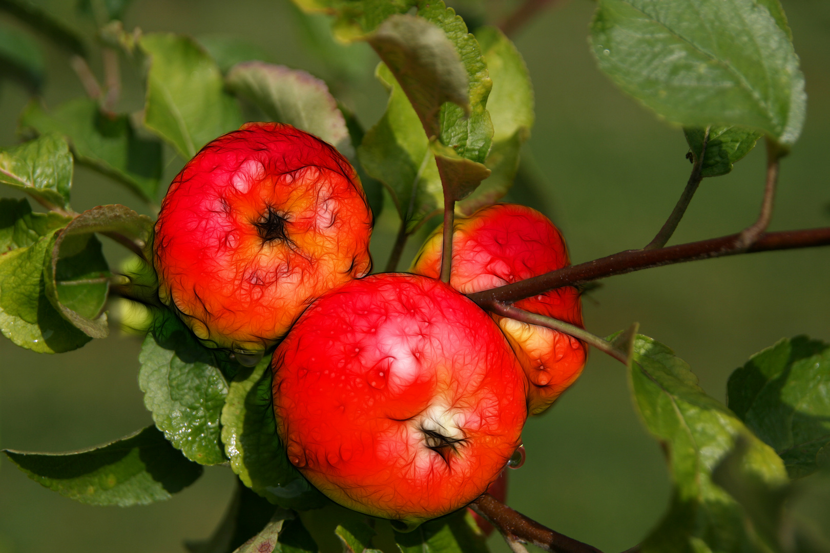 Äpfel - wie gemalt