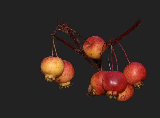 Äpfel(chen) zum Advent...