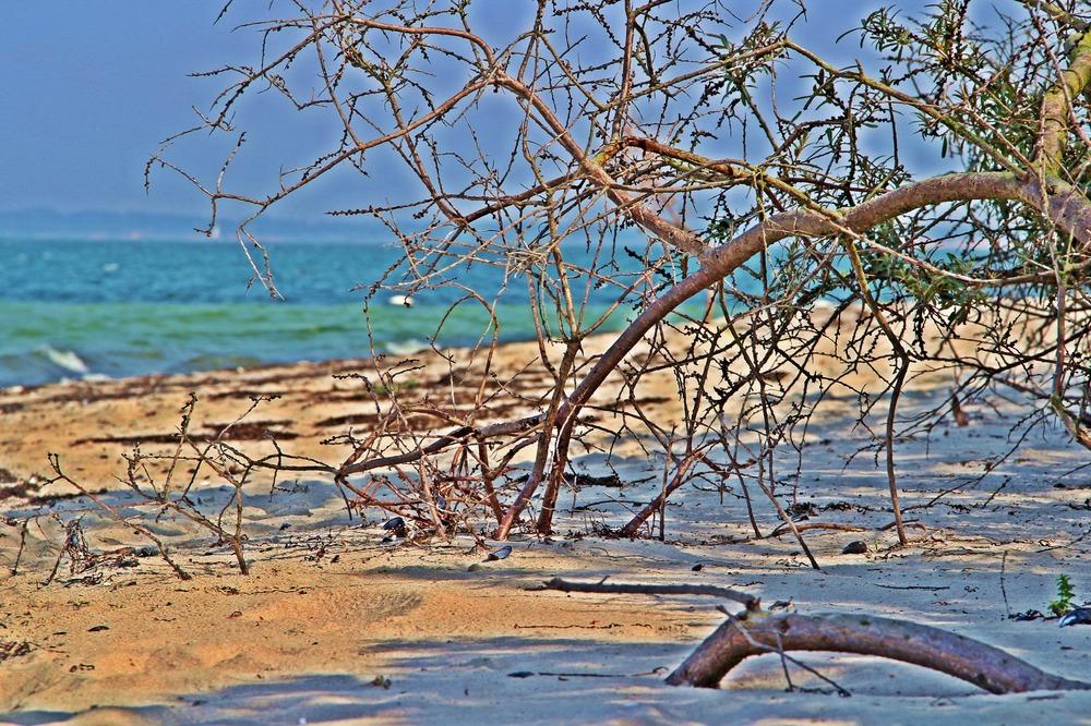 Äste am Strand Weiße Wiek