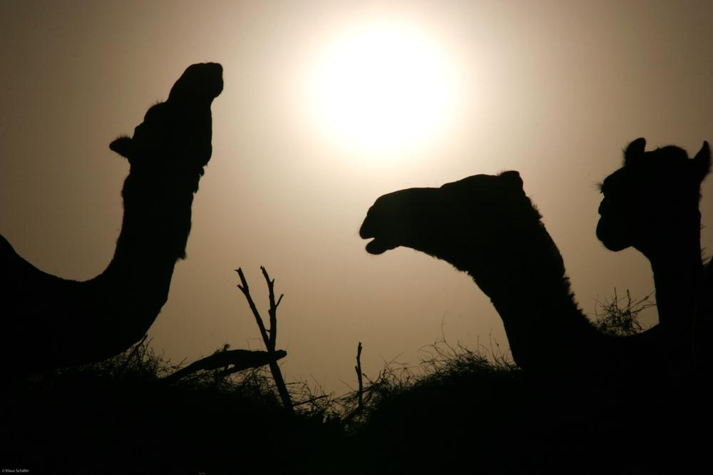 Äthiopien - Gespräch unter Kamelen
