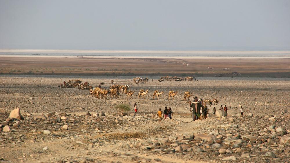 Äthiopien - Kamelkarawanen auf dem Rückweg vom Salzsee (4)
