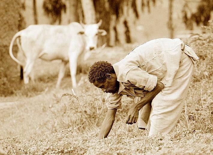 Äthiopischer Bauer bei der Feldarbeit