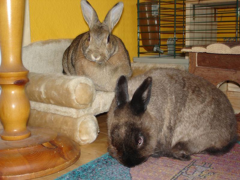 Ätsch, das ist mein Sofa.......