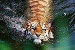 Ätsch, ich geniesse aber das kühle Wasser! - tierische Badenixe