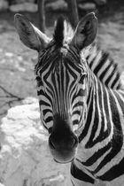 affascinante disegno della natura espressa dall'animale