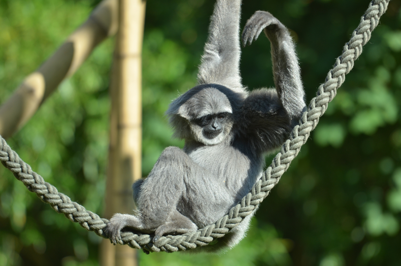 Affe im Zoo München