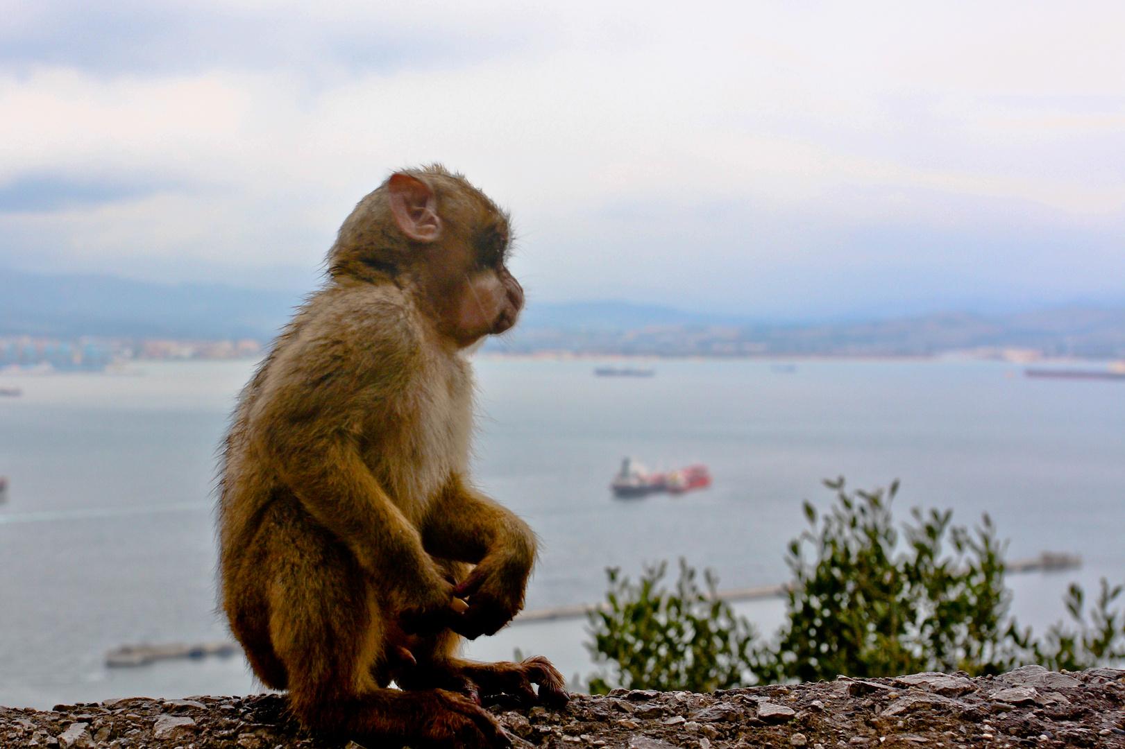 Affe mit Blick