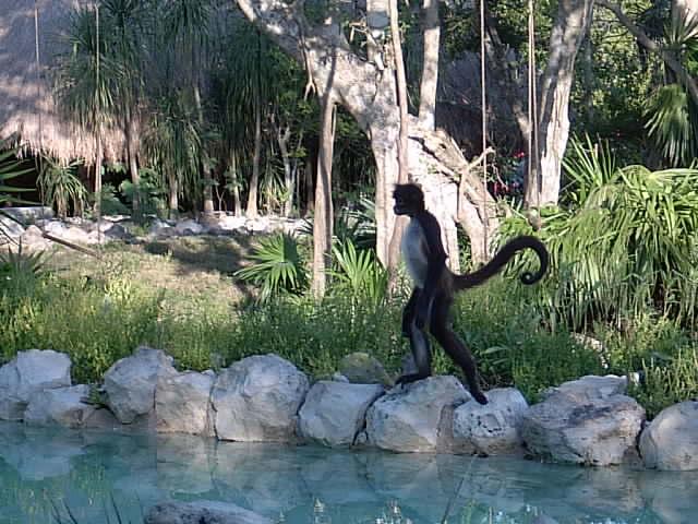 Affe mit gutem Gleichgewichtsausgleich
