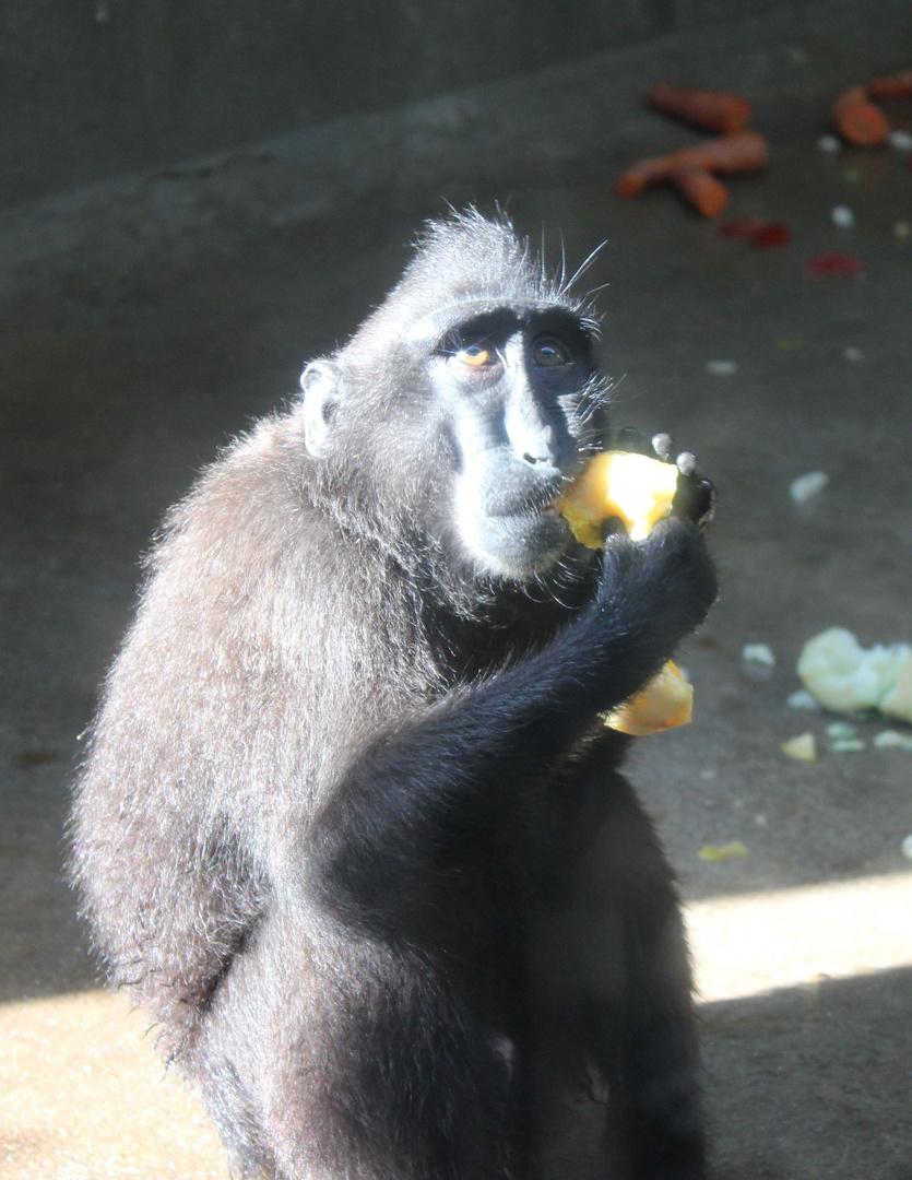 Affe mit Melone