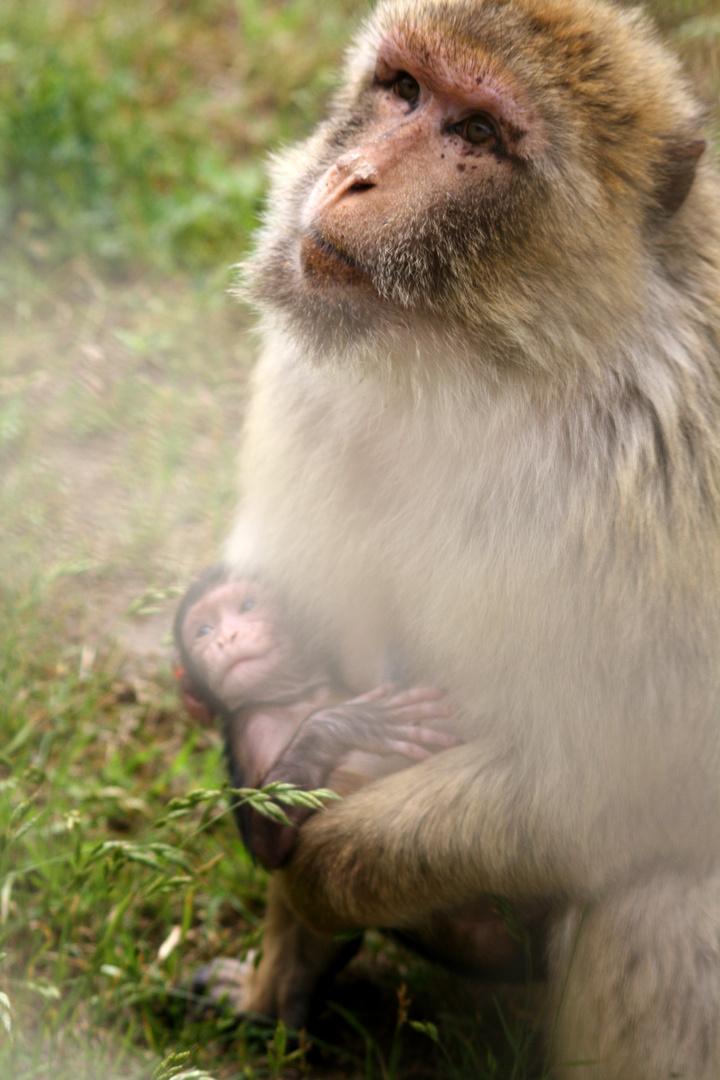 Affe und Baby
