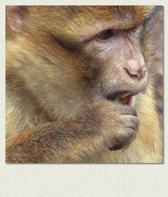 Affe(ktivität)