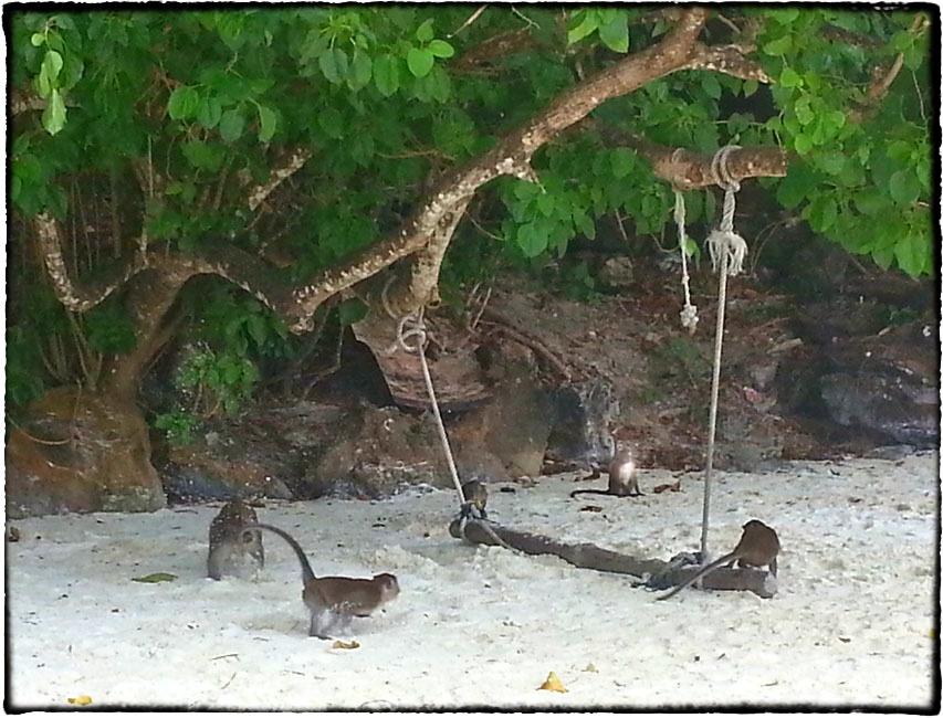 Affen am Strand
