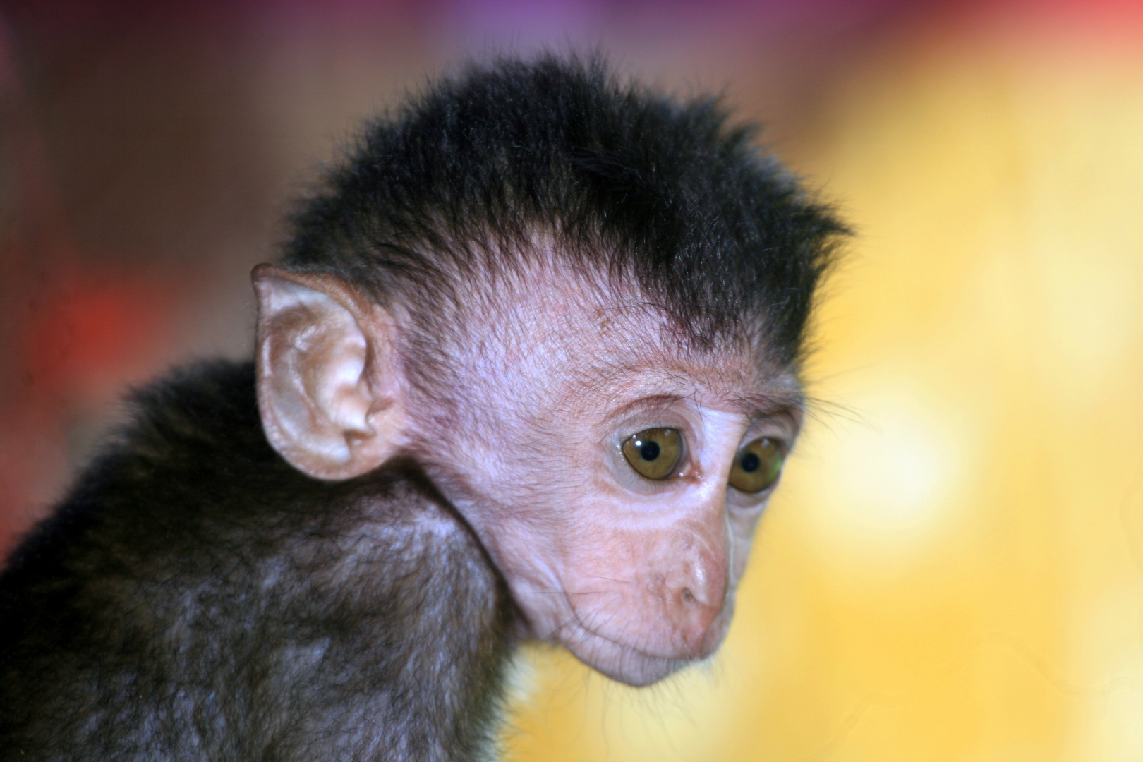 Affen Baby