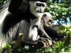 Affen Mutter mit kind;)