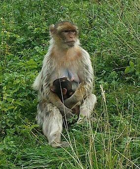Affen und Vogelpark Eckenhagen