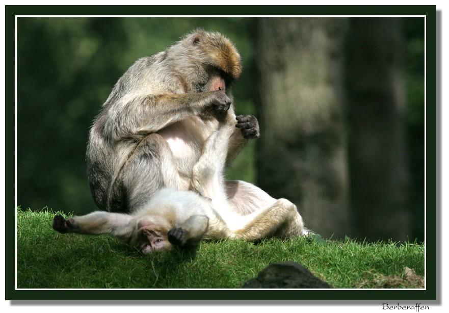Affen Wellness Pur
