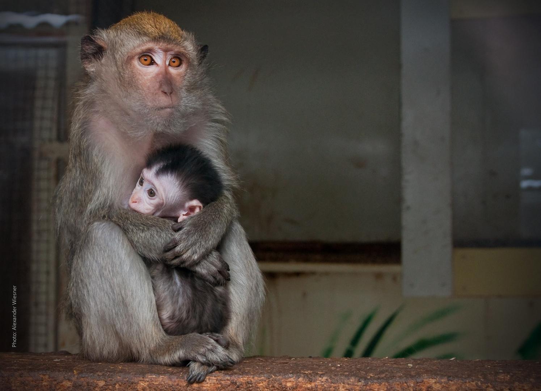 Affenbaby 9 Wochen alt